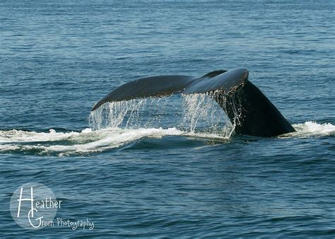 when is whale season in cape cod 17 best images about my faves vacation spots in usa on