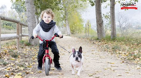 child in french 6 unique features of french bulldog with babies and children