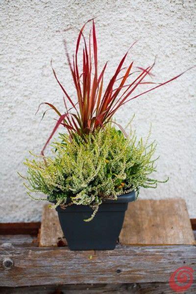 fioriere da davanzale composizioni floreali per le fioriere invernali