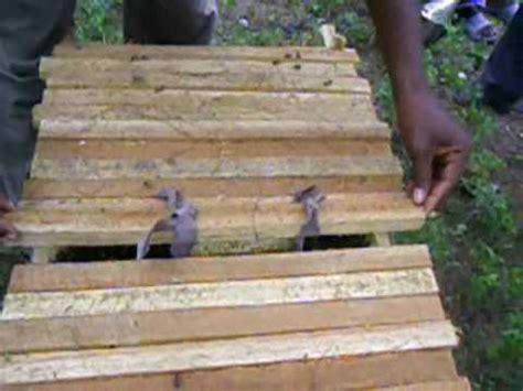 kenya top bar hive the kenya top bar hive ktbh in jacquesyl haiti youtube