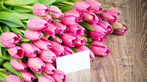 imagenes para fondo de pantalla de tulipanes tulipanes de color rosa flores del ramo fondos de