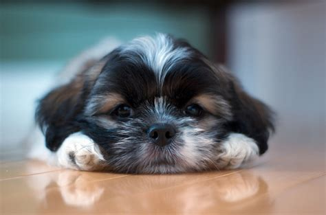 laid back breeds 10 breeds for laid back lifestyles