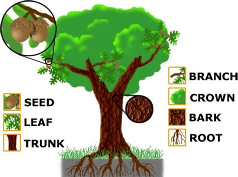 themes in education of little tree 106 best images about preschool tree study on pinterest