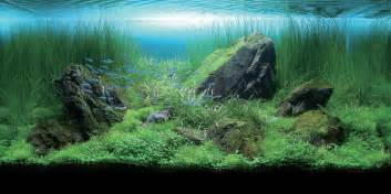 aquatics beginners guide to aquascaping