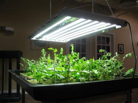 Indoor Vegetable Garden Setup Garden Design Ideas Indoor Vegetable Garden Lighting