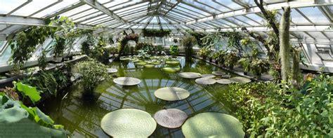botanischer garten berlin garden bilder riesenseerose im botanischen garten berlin foto
