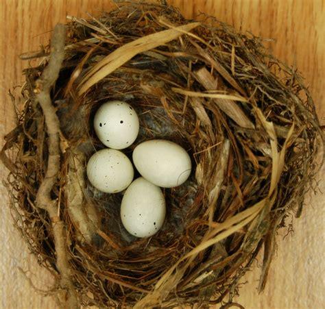 house sparrow eggs house sparrow eggs identification