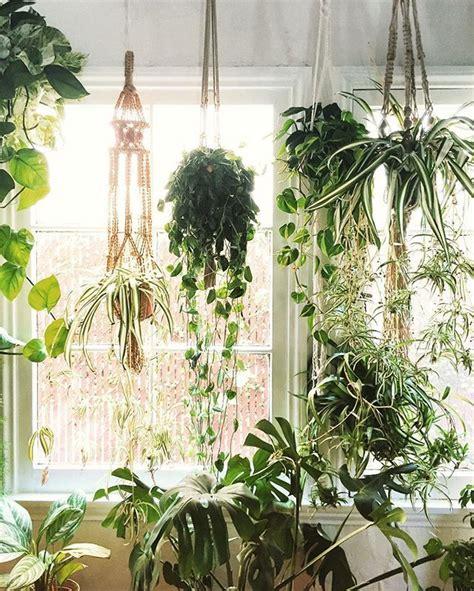 hängepflanzen wohnzimmer f 252 r meine wohnung wohl die einzige l 246 sung pflanzen