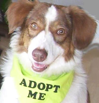 rescue dogs columbus ohio columbus connection