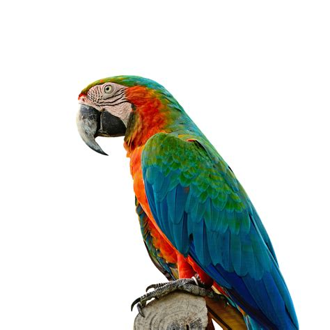 loveyourparrot com macaws