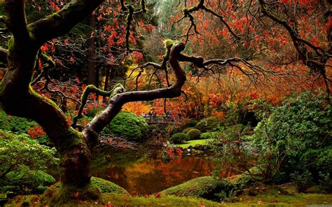 falling garden japanese garden desktop wallpapers wallpaper cave