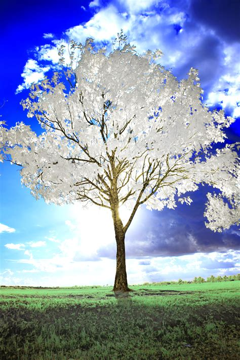 whit tree white tree by helios spada on deviantart
