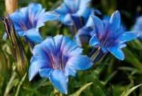 come prendere i fiori di bach depressione post partum i rimedi naturali i fiori di bach