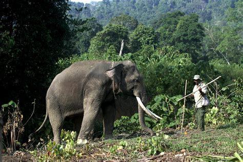 Terpal Gajah Dunia mongabay co id