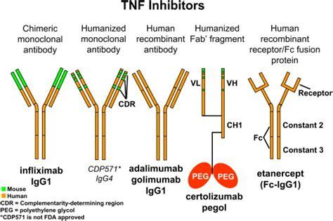 j protein immunoglobulins immunomodulator therapy monoclonal antibodies fusion