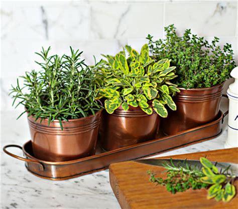 indoor container herb garden white swan homes and gardens indoor herb gardening for