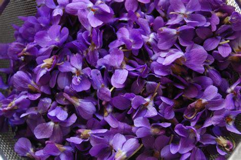 violet s violet whispering earth