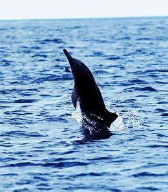 gif ocean animals jump animated gif  gifer