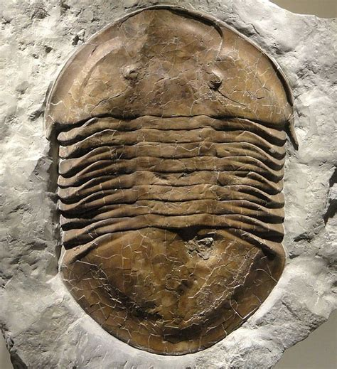 list of state fossils fossilera