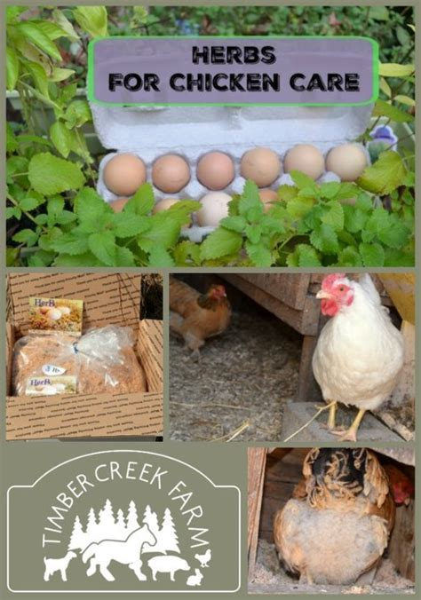Backyard Chicken Care 52 Best Images About Animals On More Best Chicken Coop Designs The Chicken And