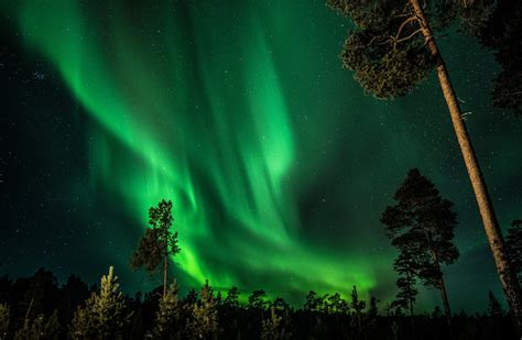 northern lights tree finland sky northern lights forest tree hd