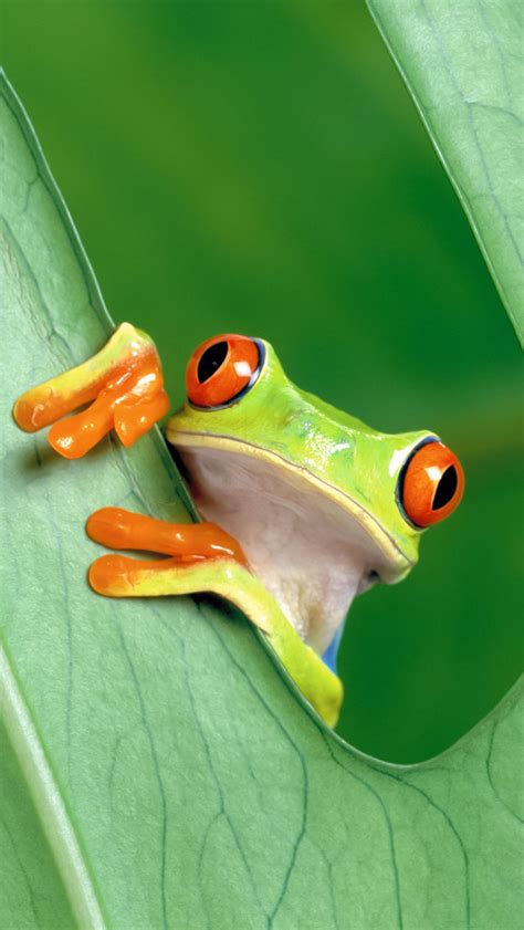wallpaper apple frog tree frog iphone 5 wallpaper pocket walls hd iphone