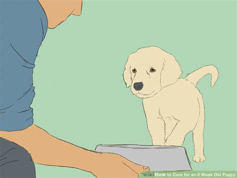 how to care for a 6 week puppy how to care for an 8 week puppy with pictures wikihow