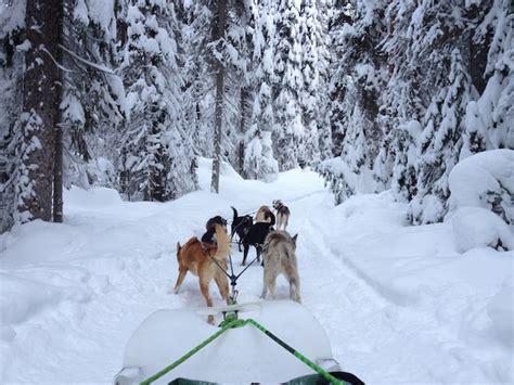 sledding canada sledding in canada