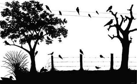 black and white wallpaper with birds black and white images of birds 20 background