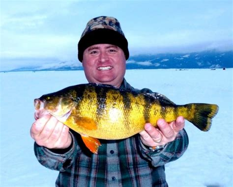 Idaho State Records Idaho Angler S Perch Ties That State S Record