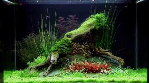 Layout Aquascape Layout 75 By Tropica Youtube