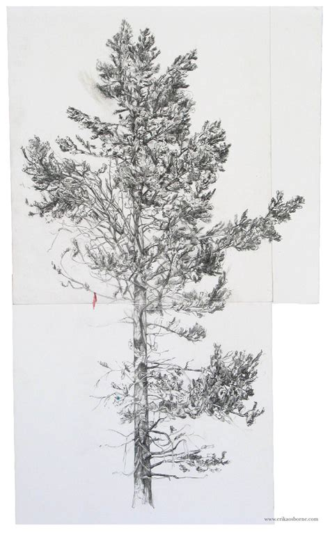 Drawing 8 Hours A Day by Tree Drawings Erika Osborne