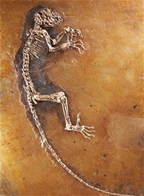 imagenes de fosiles me gustan los f 243 siles los fosiles