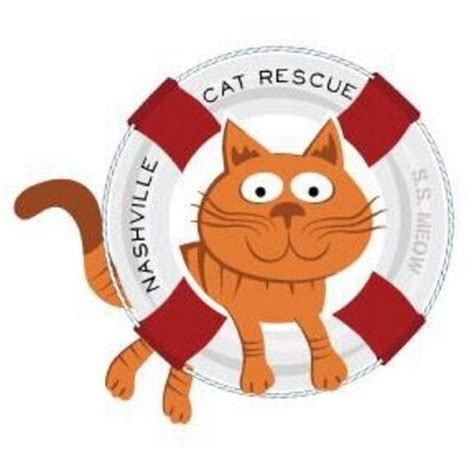 adoption nashville nashville cat rescue nashcatrescue