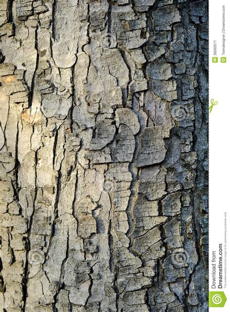 skin the color of bark bark texture stock image image 36060571