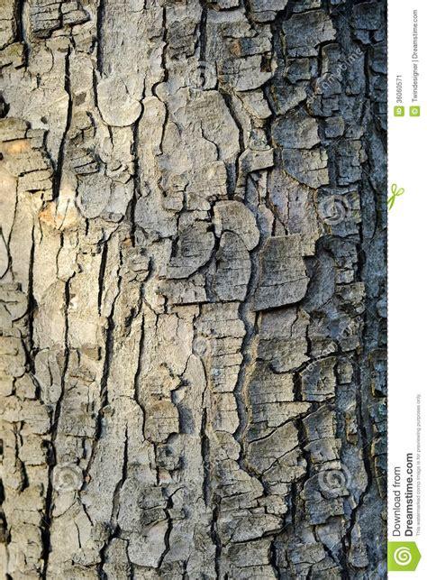 bark color bark texture stock image image 36060571