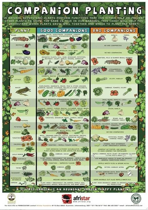 Planting Vegetable Garden Layout 25 Best Ideas About Vegetable Garden Layouts On Pinterest Garden Layouts Vegetable Planting