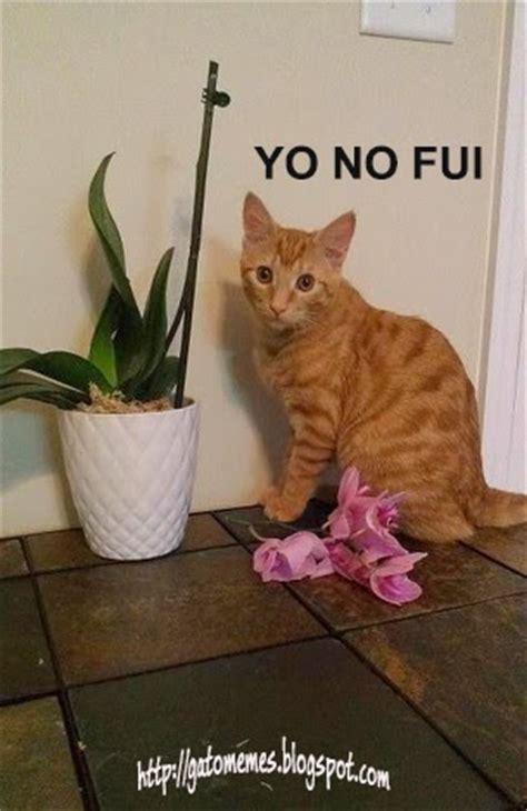 gatitos traviesos memes de gatos traviesos gatito armando rompecabezas