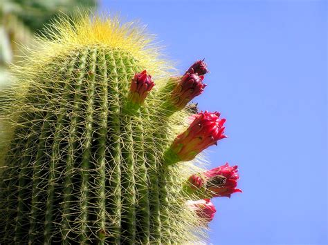 desert cactus hd wallpapers