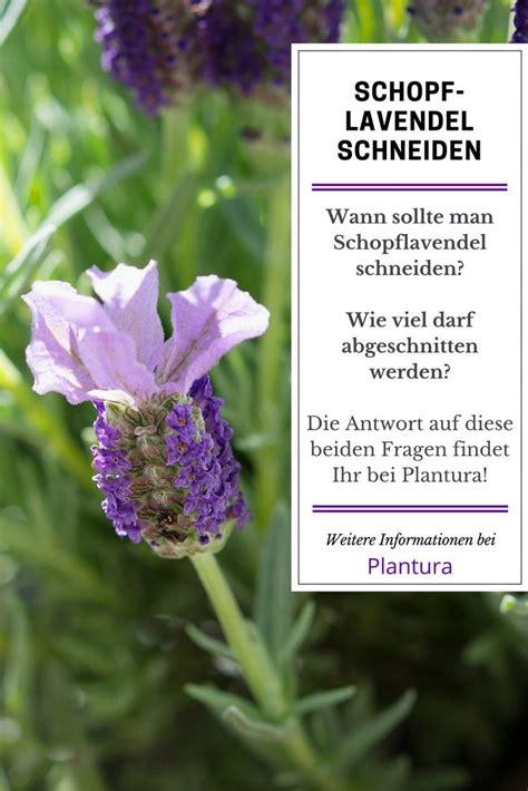 Lavendel Wann Schneiden 5405 by 13 Best Lavendel Schneiden Trocknen Images On