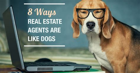 puppy realty 8 ways real estate agents are like s best friend lighter side of real estate