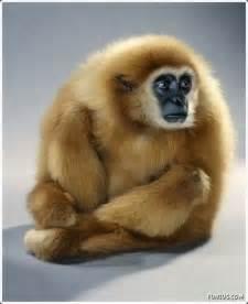 funzug com different types of funny monkeys