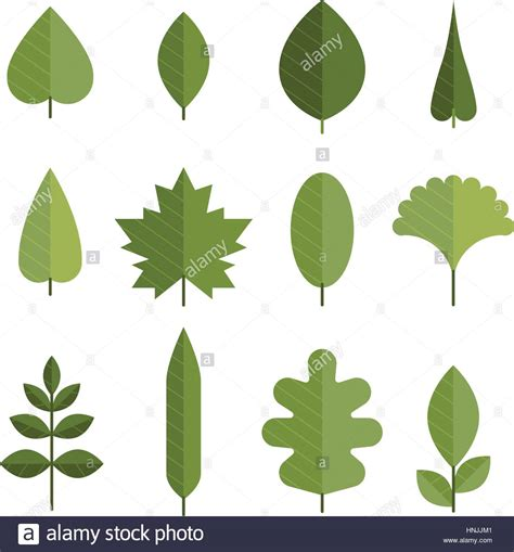 different types of trees stock vector art 635949946 istock set of flat green leaves different types of young leaves