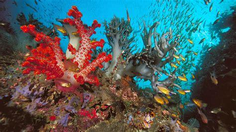 wallpaper animasi laut 20 wallpaper bawah laut terbaru bangiz