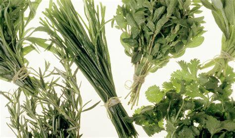las 10 mejores flores medicinales top 10 de plantas medicinales de m 233 xico salud180