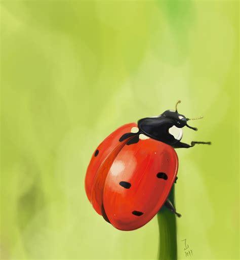 ladybug exercise photoshop practice ahmad ajlouny