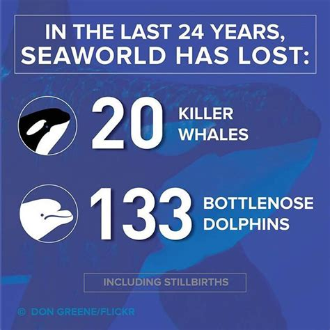 I Am About To Make A Shameful Admission I Secretl by 1000 Images About Anti Seaworld On Orcas San