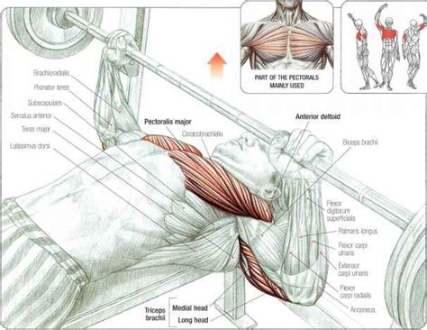 what muscles does incline bench work incline presses abdominal muscles fitness vip