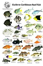 the ultimate guide to hawaiian reef fishes sea turtles limited to stock on hand get