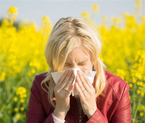 what to give a for fever how to give hay fever the heave ho insidekent